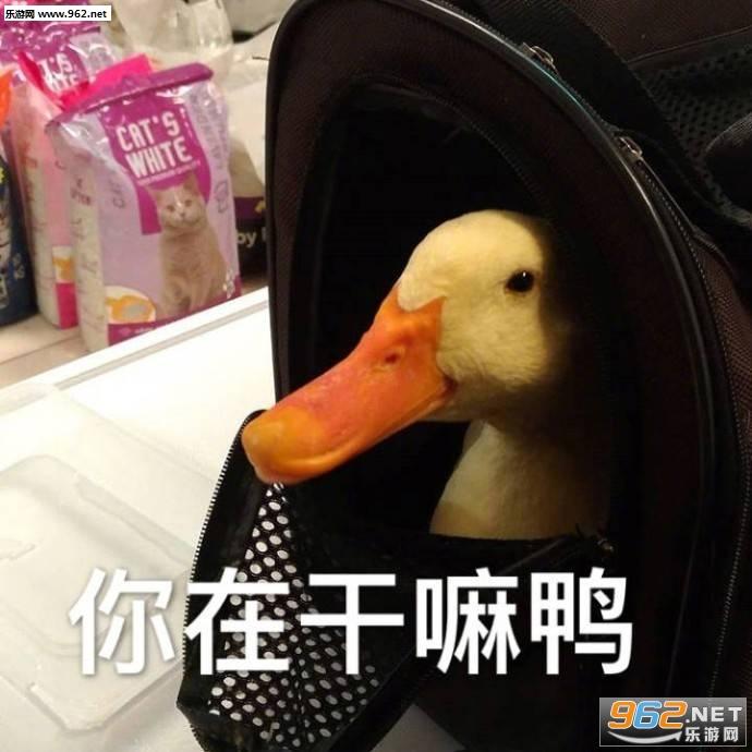 翻车了鸭表情包 今天也要开心鸭鸭子表情包下载 乐游网游戏下载