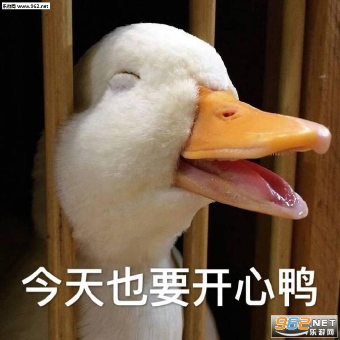 今天加油震惊鸭表情不想小表情图片图片