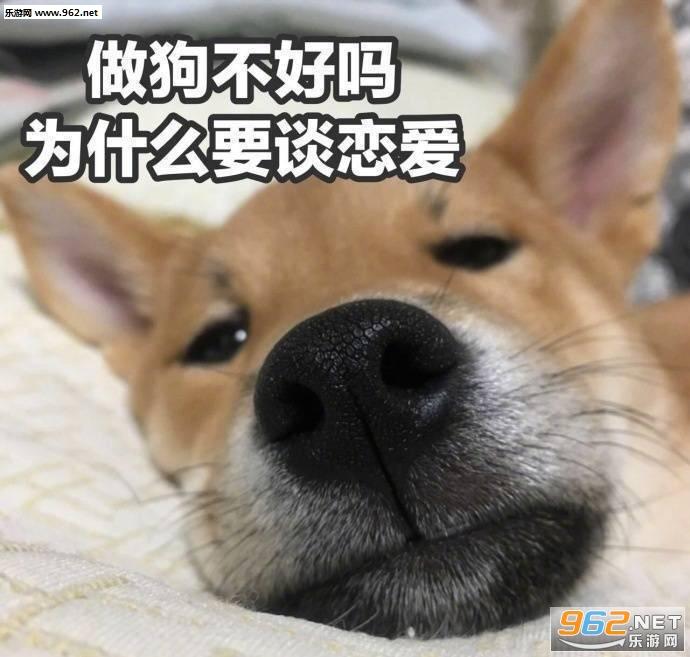 是一组搞笑又可爱的狗狗表情包,内容是莫挨老子,向操蛋的生活低下狗头
