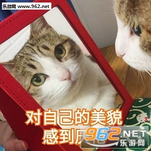 我跟你讲我就这表情猫咪表情包图片