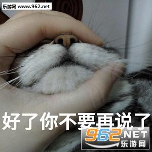 朕的江山要亡了表情猫咪微信头像荷花表情图片