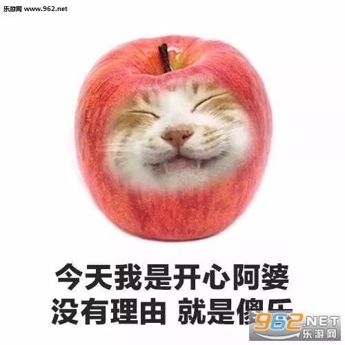 今天我是流泪猫猫头猫咪水果系列表情包图片图片