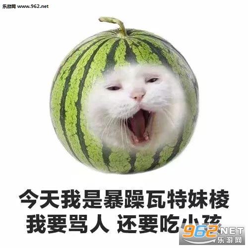 今天我是流泪猫猫头水果猫咪系列图片表情傻图片表情包呆图片