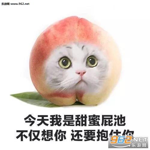 今天我是流泪猫猫头表情图片系列动态表情迷你斗小水果包猫咪图图片