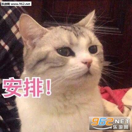 莫说咯图片水夹不住老表情眼睛特效表情包食物的加给猫咪图片