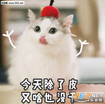 我不仅出去了我还要看到乱说可爱表情猫咪a表情表情包之魂吧
