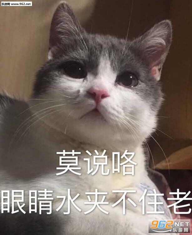 莫说咯眼睛水夹不住老猫咪表情包图片图片