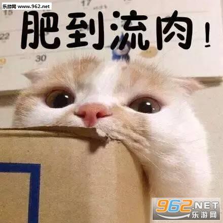 偷偷开心猫咪表情包图片|q大不溜q什么意思表情包下载图片