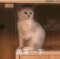 开局我先这样猫咪动图