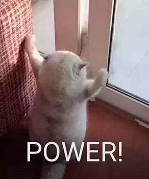 power猫猫表情包