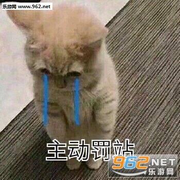萌猫道歉带字表情包