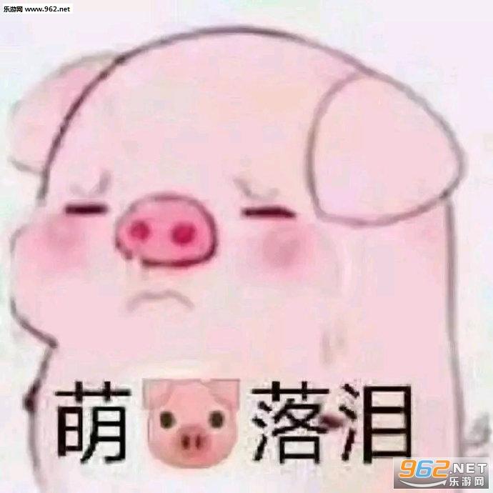 萌猪落泪表情包图片