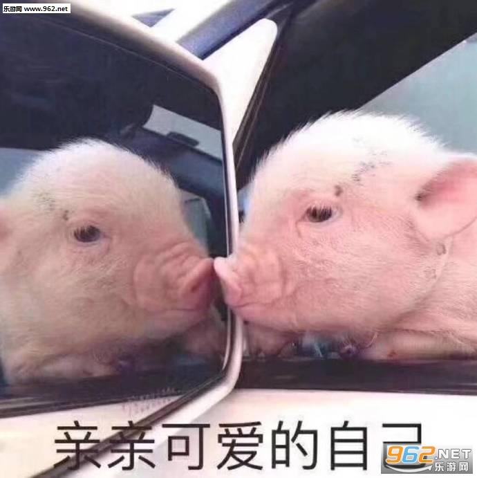 亲亲可爱的自己猪图片表情包截图3
