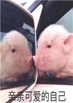 亲亲可爱的自己猪图片表情包