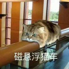磁悬浮猫车表情包