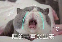磁悬浮猫车表情包截图0