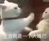 磁悬浮猫车表情包截图1