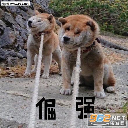看 门 狗 2 下载 手机 版