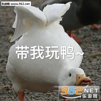 刚下班鸭可爱鸭鸭表情包