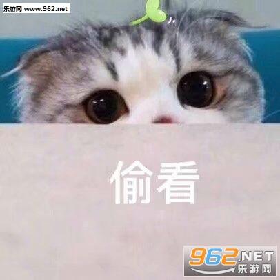 猫猫虫猫咪图片