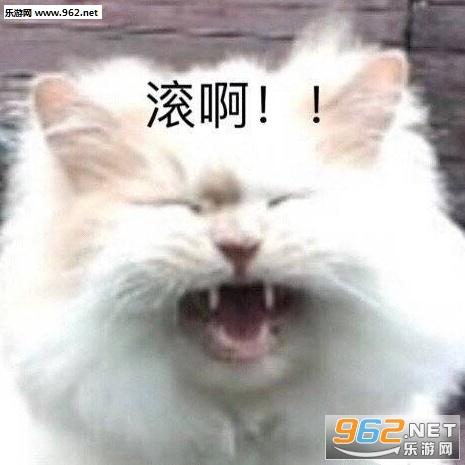 猫猫虫猫咪图片截图0