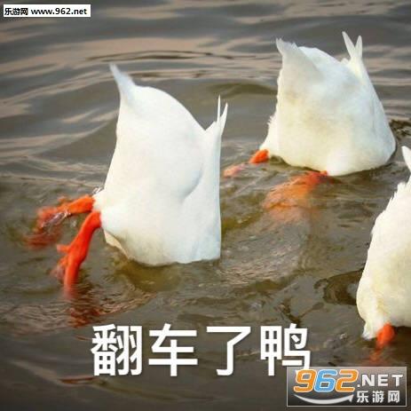 刚下班鸭可爱鸭鸭表情包截图0