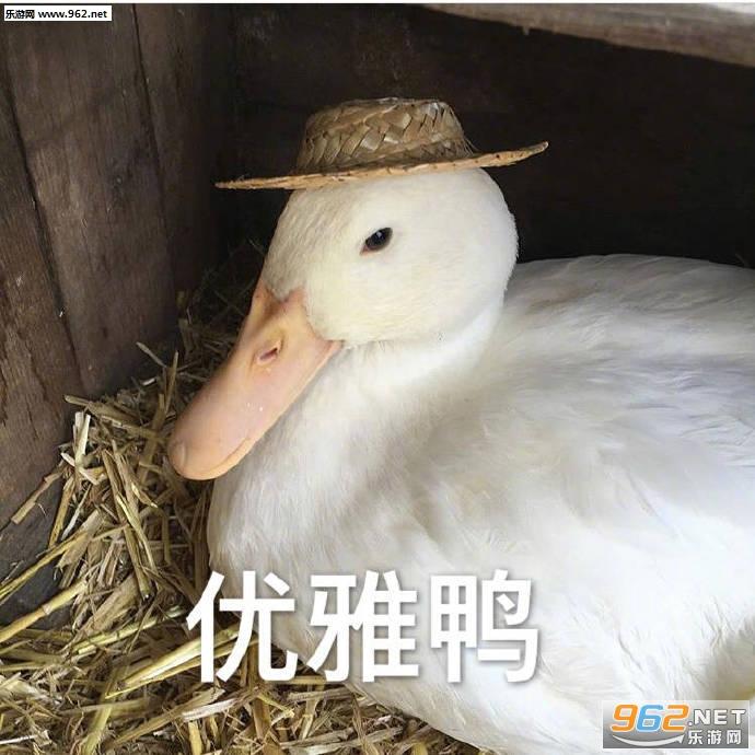 刚下班鸭可爱鸭鸭表情包截图1