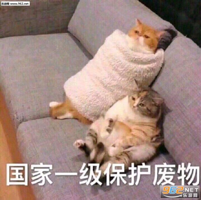 少和我来这套橘猫表情包