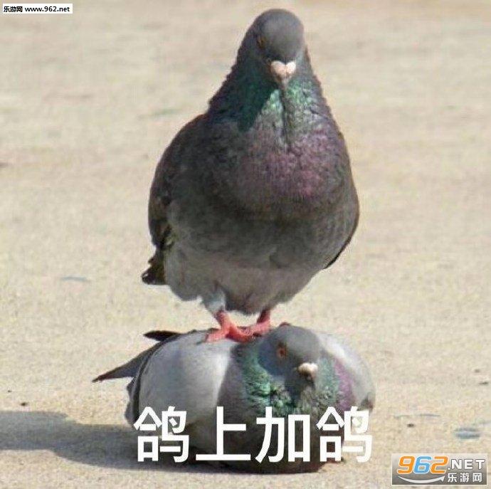 鸽累了表情包