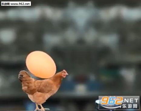 母鸡护蛋模拟器手机版_截图2