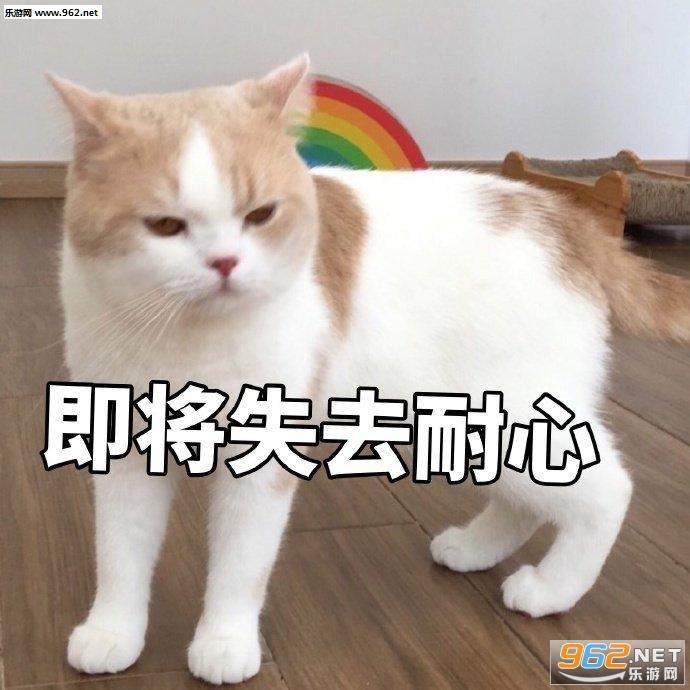 少和我来这套橘猫表情包截图2
