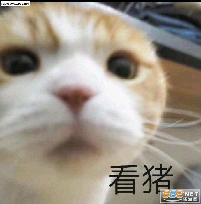 少和我来这套橘猫表情包截图5