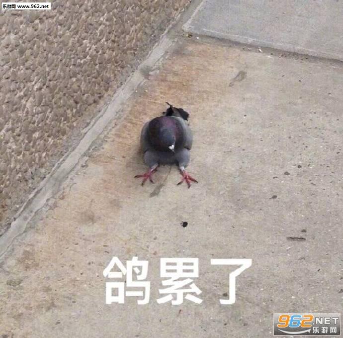 鸽累了表情包截图2