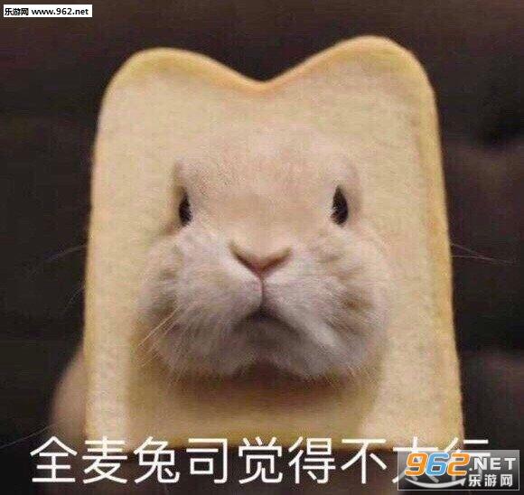 全麦兔司觉得不太行表情包