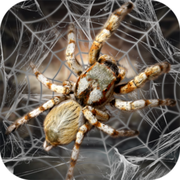 蜘蛛模拟生存模拟器安卓版v1.0