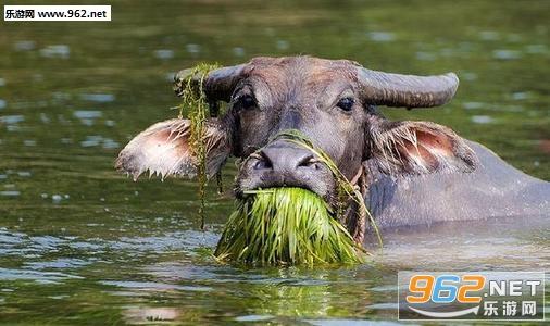 老牛吃嫩草的表情包截�D0