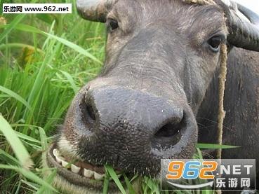老牛吃嫩草的表情包截�D1