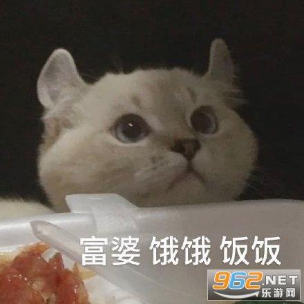 饿饿饭饭表情包鲨鱼猫猫截图2