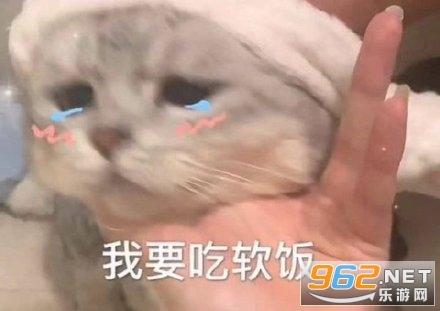 餓餓飯飯表情包鯊魚貓貓截圖3