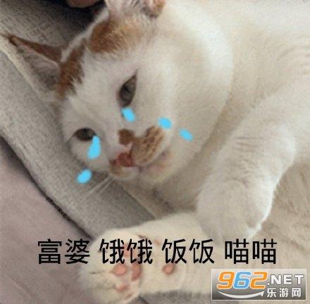 餓餓飯飯表情包鯊魚貓貓截圖4