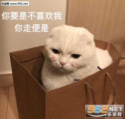 喜欢的猫不出现出现的猫不喜欢图片