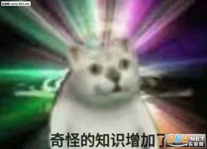 奇怪的知识增加了猫表情包图片