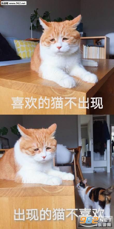 喜欢的猫不出现出现的猫不喜欢图片截图0
