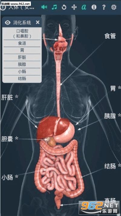 人体系统女性3d专业中文版v1.0(Human body female)截图2