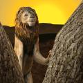 野生狮子生存模拟器官方版中文版