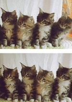 一排小猫点头的表情包gif