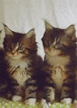 一排猫咪点头表情包gif