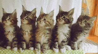一排猫咪点头表情包gif抖音截图0