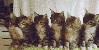 一排猫咪点头表情包gif抖音截图1