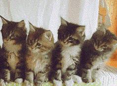 一排猫咪点头表情包gif抖音截图2